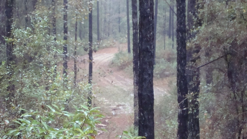 Food Plot view from a deer stand at ATCO Plantation